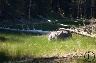 Rock amongst the fallen trees.