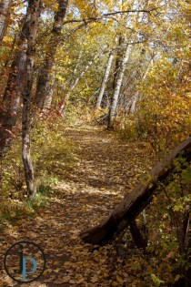 Hidden Trail