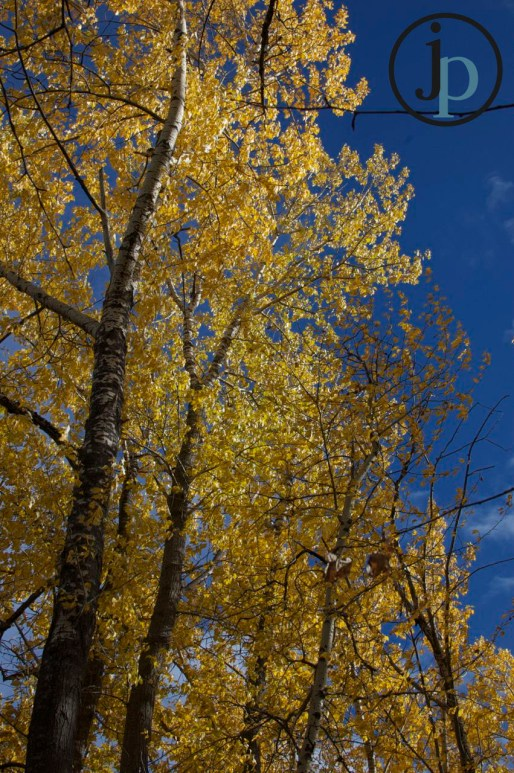 Yellowness with a Blue Sky