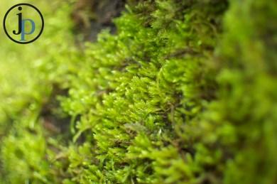 Bright Green Moss