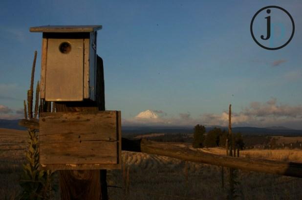 Mt. Hood and a Birdhouse