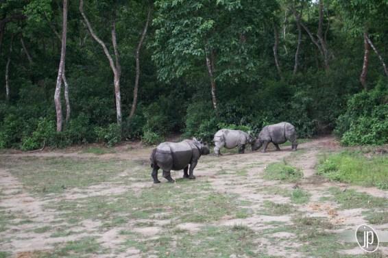 Chitwan (17)