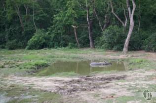 Chitwan (18)