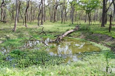 Chitwan (3)