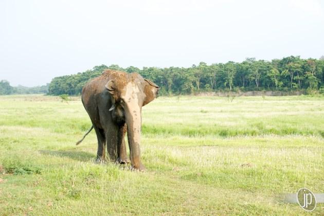 Chitwan (9)