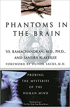 Brain phantoms pdf the in