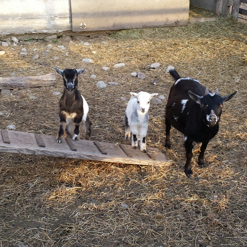 Clyde, Bonnie and Clarabelle