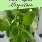 7 Incredible Indoor Plants That Repel Mosquitoes The Practical Planter