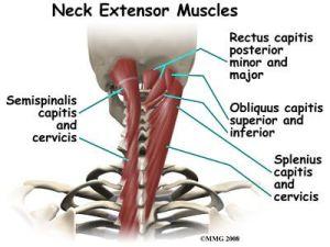 deep neck extensors the prehab guys exercises to improve neck strength