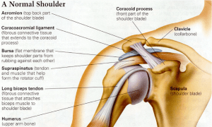 rotator cuff the prehab guys