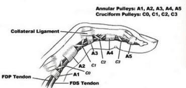 finger pulleys the prehab guys