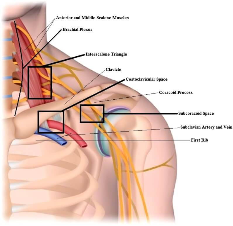 thoracic outlet relevant anatomy the prehab guys