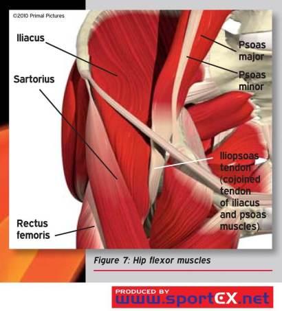 how to manage a hip flexor strain the prehab guys