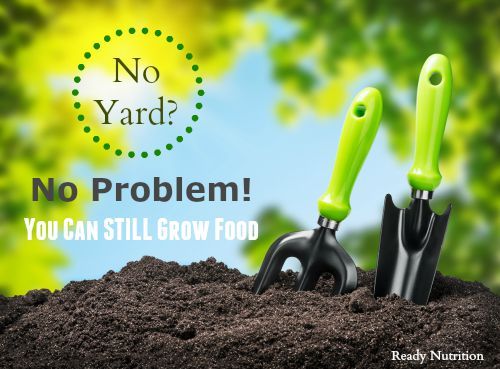 No Yard? No Problem! You Can STILL Grow Food!