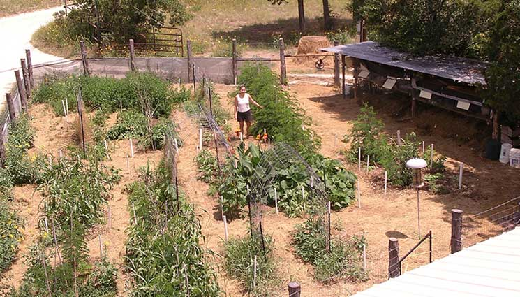 """Last summer, when a friend presented me with a set of author Marjory Wildcraft's gardening DVDs, I thought I already knew everything about growing vegetables. This winter, I finally started watching """"Grow Your Own Groceries"""" and was amazed at how much I didn't know about rabbits, chickens, compost and bugs."""