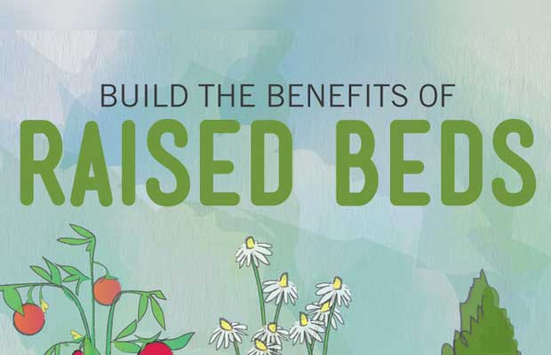 Raised garden beds are one option for providing a source of fresh food to your family that are preferred by some people for a lot of very valid reasons. Some of the reasons raised beds are preferred are: