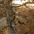 Hunting safety comes down to common sense, and like prepping, it is logical to prepare in advance for bad things happening. If you plan on hunting this year and like to get a little higher, make sure that you are able to come home to your family by perform some simple tree stand safety measures. It could keep you from having a bad day.