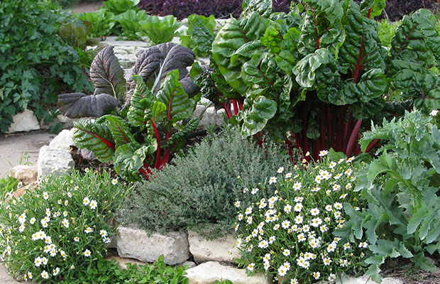 The edible landscapes concept takes the subject to another level and incorporates the food into every aspect of your yard. Instead of limiting food production to a rectangle of dirt, you can feed your family in other ways that require less maintenance and could remain hidden from view.