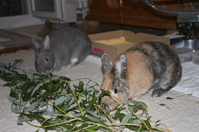 rabbits eating tree leaf and branch