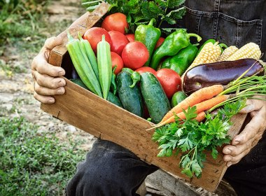 What are the most important things to consider? In this article I cover some of the requirements of creating your master food plan.