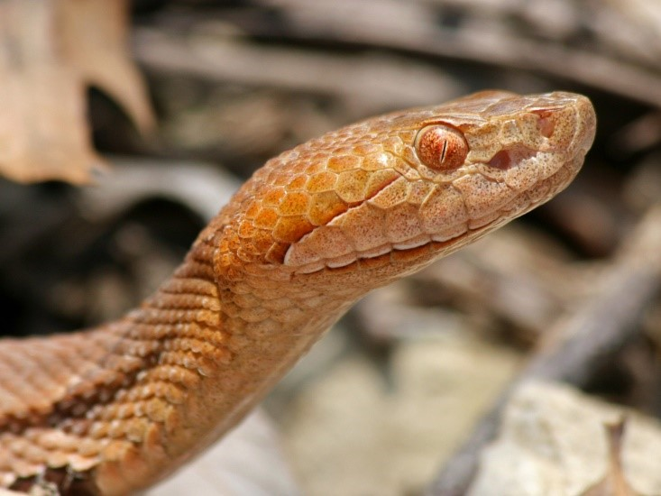 The best way to increase your chances of surviving a venomous snake bite is to have a contingency plan in place.