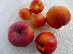 When we turn to sustainability, a lot of preppers consider tree fruits for part of our long-term food supply. They can be expensive to buy, so it's tempting to just plant a seed from the tasty apple we ate for lunch or the fruits of a nearby tree that's thriving. Johnny Appleseed did it after all.