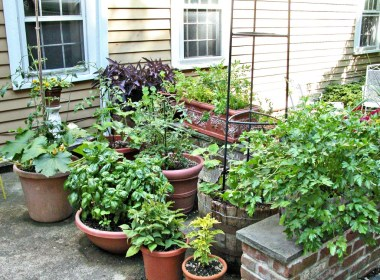 Some of us are restricted entirely to small spaces, and some of us have either clay, rock, or sandy soils that are easier to avoid than to mitigate. Some of us keep container gardens going for convenience, enjoyment, and mitigating seasonal threats from pests to cold, high winds or thunderstorms to dry conditions, even when we have some elbow room and decent starting soil.