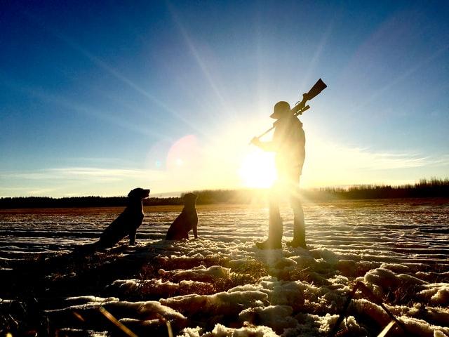 A good hunting dog needs a job to do.