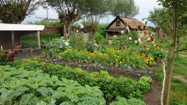 Complete Homesteading Guide: How to Become a Homesteader