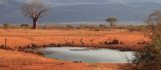 Follow wildlife to find a water source