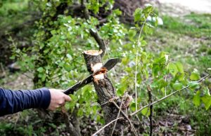 Best Machete for Chopping Wood