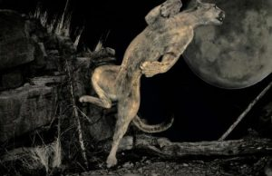 Tips for Night Hunting