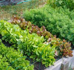 How to Start a Survival Garden