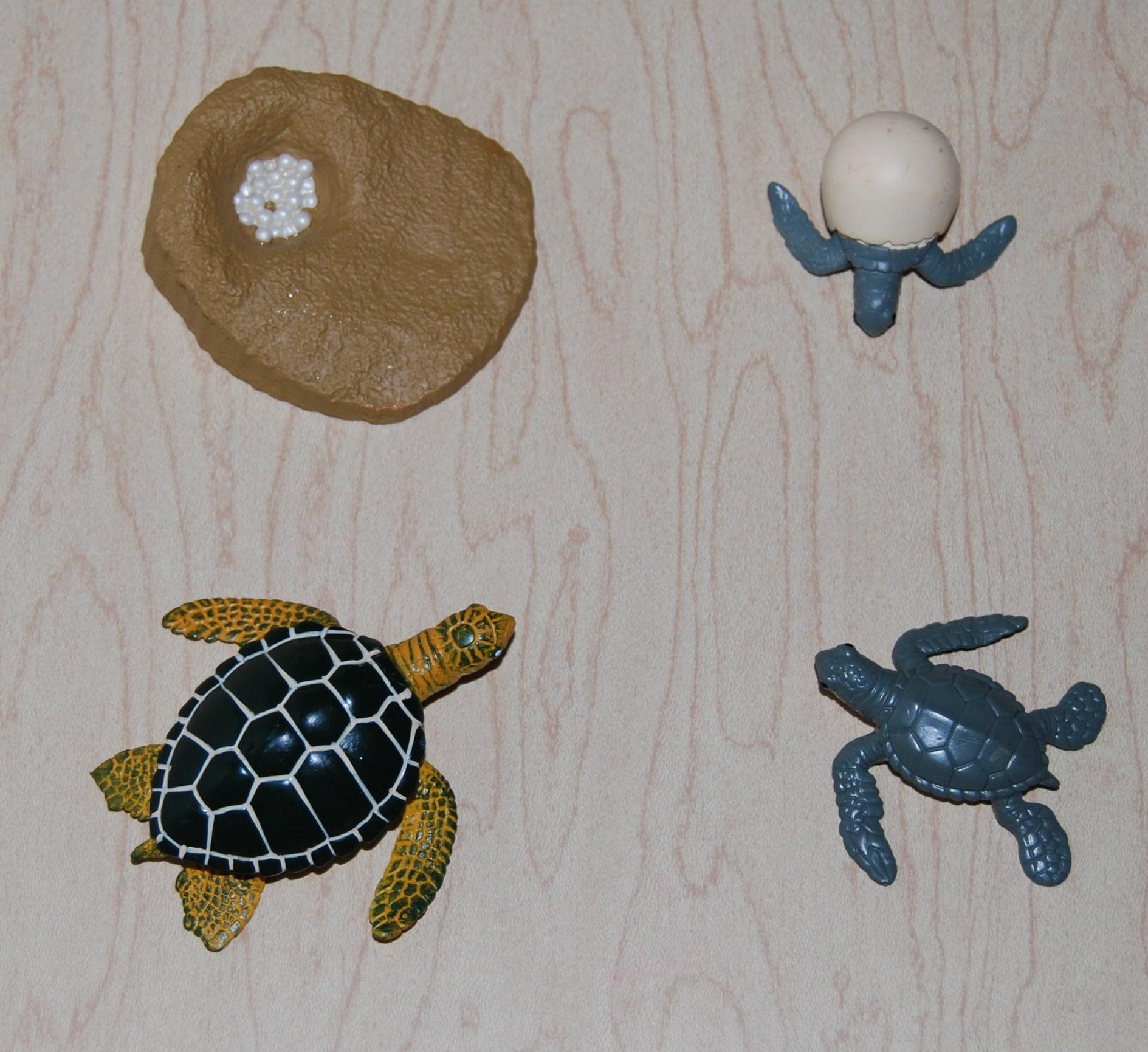 Sea Turtle Post 018 The Preschool Toolbox Blog