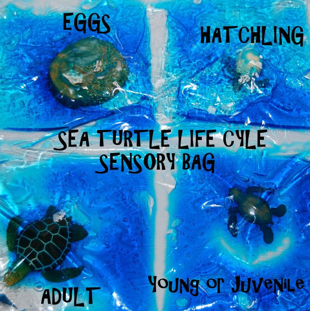 sea turtle life cycle diagram audio wiring for 2004 silverado ocean theme activities preschool: & sensory bags