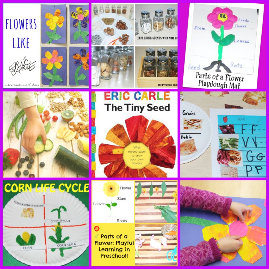 Eric Carle Author Study The Tiny Seed Activities For