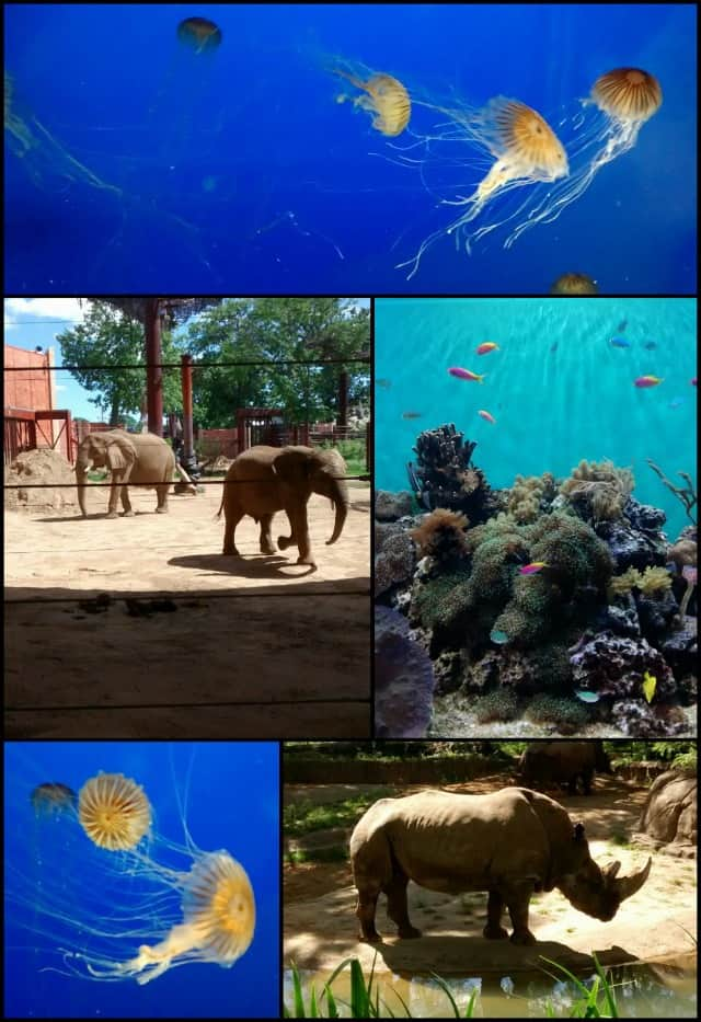 Pictures from the Toledo Zoo and Aquarium