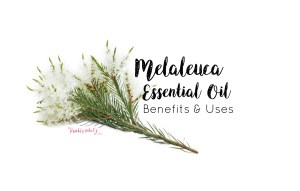 doTERRA Melaleuca Essential Oil – Benefits, Uses, Video