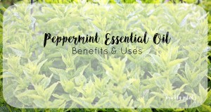 doTERRA Peppermint Essential Oil – Benefits, Uses, Videos