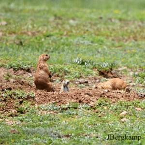 things to do in oklahoma wichita mountains wildlife refuge