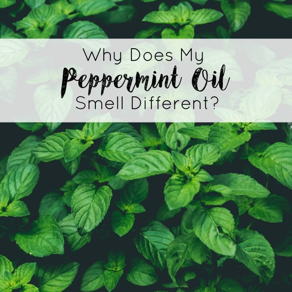 Why Does My Peppermint Oil Smell Different?