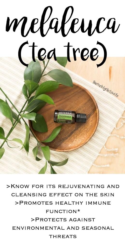 doterra melaleuca essential oil uses and benefits tea tree