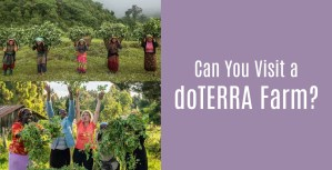 Can you visit a doTERRA farm?