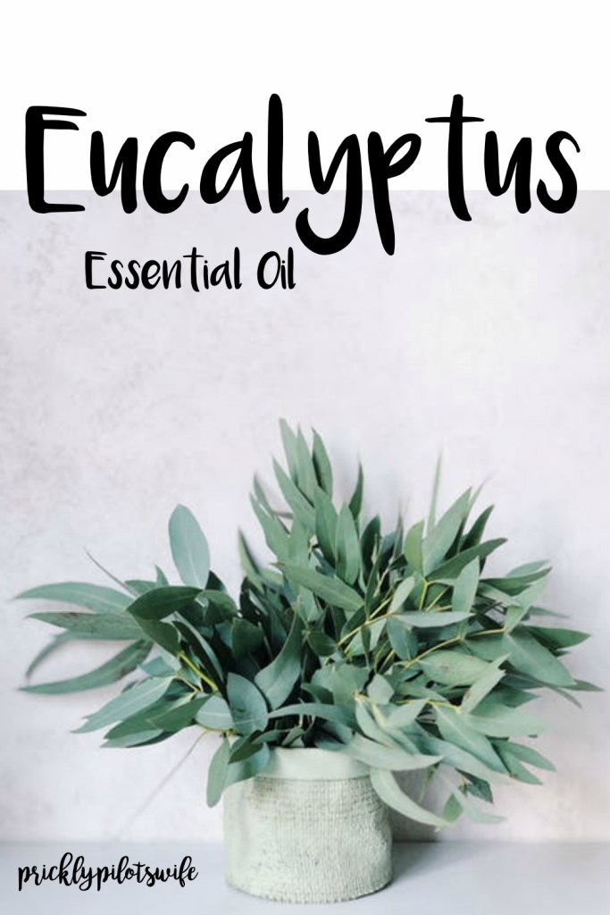 "Image of a bouquet of eucalyptus in a off-white woven pot with ""Eucalyptus Essential Oil"" written over it // Prickly Pilot's Wife"