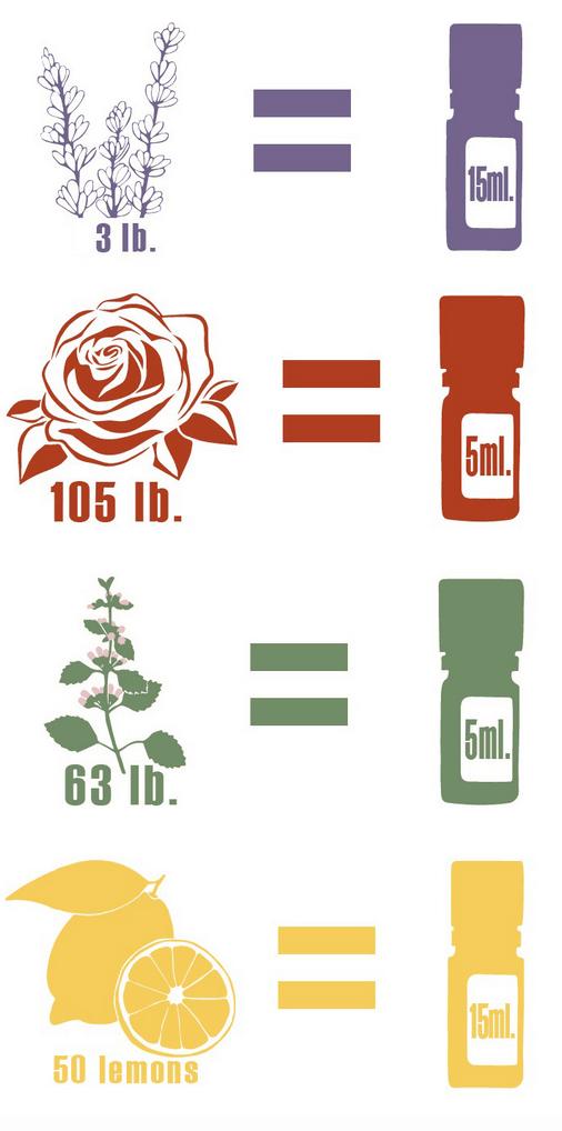 doterra essential oils lavender rose melissa lemon roses for valentine's day