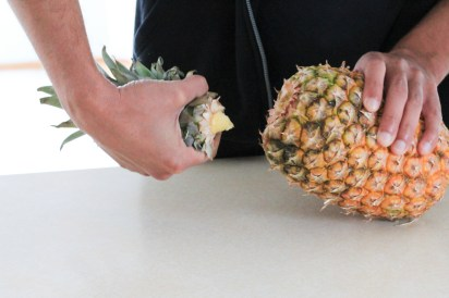 How to plant a pineapple - www.ThePrimalDesire.com
