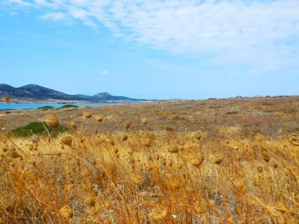 vacanza-Cicladi-theprimerose-Rosa-Tagliafierro-Paros-0701