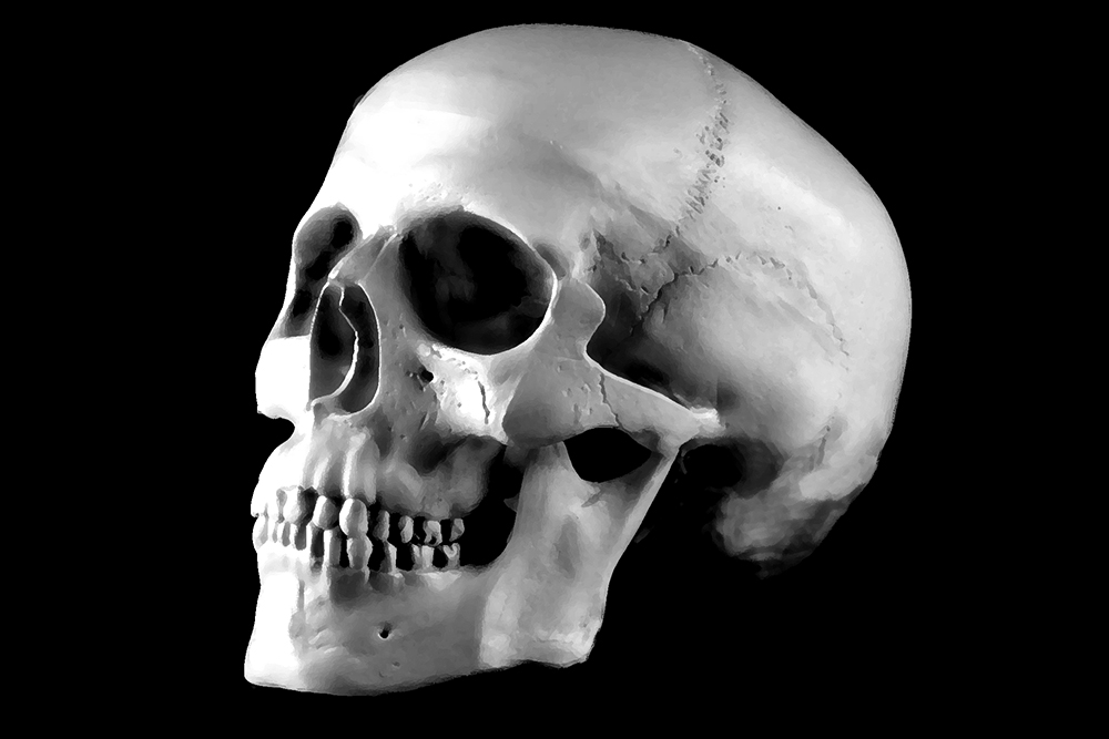 skull, black and white, memento mori, symbol, death