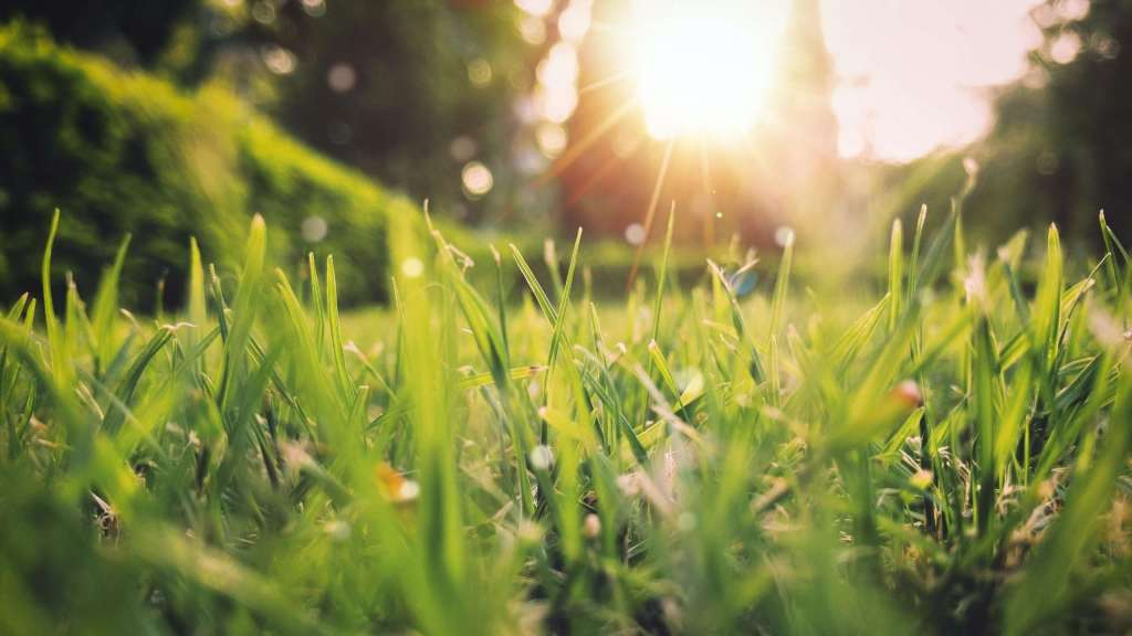 a close up of grass with the sun shining brightly