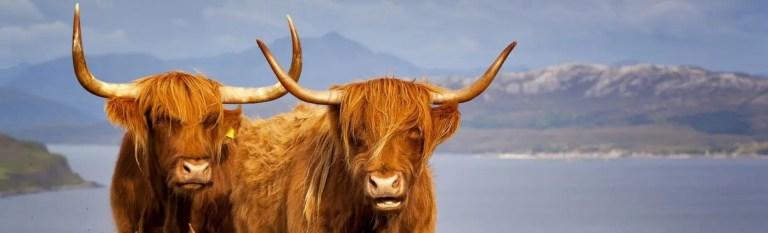 scottish highlands life the professional traveller